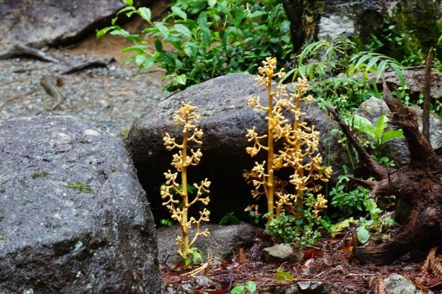 DSC03826 unusual plants