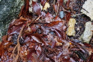 DSC03827 wet leaves